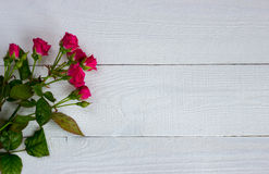 Miniature roses on white boards Royalty Free Stock Images