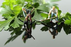 Miniature scale model gardeners with tools cutting flat leaf parsley. On a gloss background with reflection Stock Photos