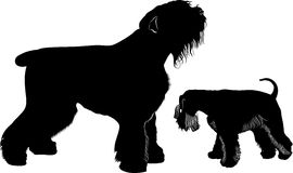 Miniature schnauzer and black Terrier Royalty Free Stock Photography