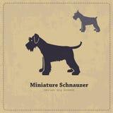Miniature Schnauzer silhouette vintage poster Royalty Free Stock Image