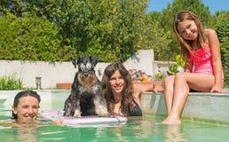 Miniature schnauzer and swimming pool stock photos