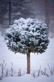 Miniature sculpted evergreen tree in snowy scene.