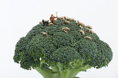 Miniature shepherd. Shepherd with his flock of sheep on a broccoli plant Stock Photography