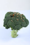 Miniature shepherd. Shepherd with his flock of sheep on a broccoli plant Stock Images