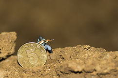 A miniature soldier are shooting. A miniature soldiers are shooting enemy under a coin Royalty Free Stock Photo