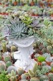 Miniature succulent plants decorated in white pot Stock Photography