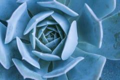 Miniature succulent plants Stock Images