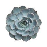 Miniature succulent plants Stock Photos