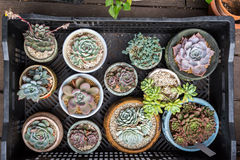 Miniature succulent plants. In garden royalty free stock image
