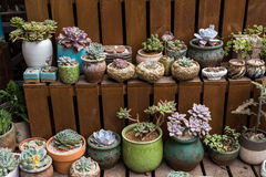 Miniature succulent plants. In garden royalty free stock images