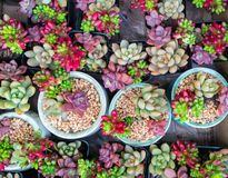 Miniature succulent plants. In garden stock images