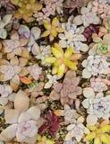 Miniature succulent plants. In garden stock photos