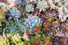 Miniature succulent plants. In garden stock image