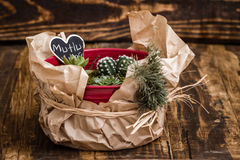 Miniature Succulent Plants in Red Pot on Wooden Background Stock Photo