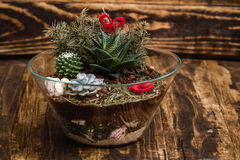Miniature Succulent Plants on Wooden Background Royalty Free Stock Images