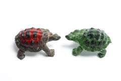 Miniature Tortoises Stock Photos