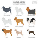 Miniature toy dog breeds collection isolated on white. Flat style Stock Photos