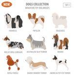 Miniature toy dog breeds, set icon isolated on white . Flat styl. E. Vector illustration Royalty Free Stock Images