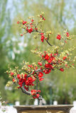 Miniature tree stock images