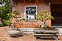 Miniature trees in Temple of Literature. Hanoi, Vietnam Stock Photos
