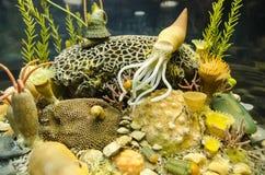 Miniature underwater world Stock Photo