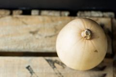 Miniature White Butternut Squash Pumpkin on Vintage Wood Box. Halloween Thanksgiving Autumn Fall Harvest. Stock Images