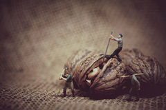 Miniature worker with a crowbar trying to open a walnut. Color t royalty free stock images