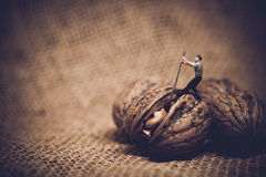 Miniature worker with a crowbar trying to open a walnut Stock Image