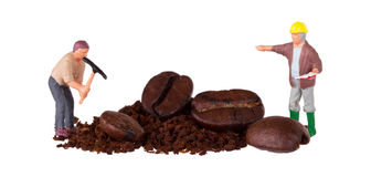 Miniature worker working on a coffee bean Royalty Free Stock Images