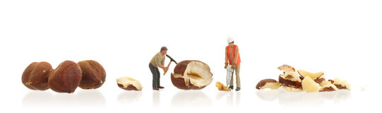Miniature worker working with hazelnuts Stock Image