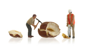 Miniature worker working with hazelnuts Stock Photography