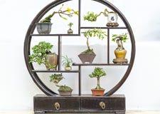 Miniatures bonsai pots Stock Image
