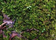 Miniaturfarnblatthintergrund stockbilder