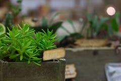 Miniaturglashaus mit Pflanzerkästen Stockfotografie