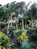 Miniaturowa dżungla obraz royalty free