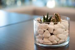 Miniaturowa kaktusowa tłustoszowata roślina Selekcyjna ostrość Obrazy Stock