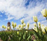 Miniaturowa latarnia morska z tulipanami w przedpolu Obrazy Royalty Free