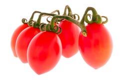 miniaturowe włochów pomidorów obraz stock