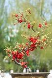 Miniaturowy drzewo obrazy stock