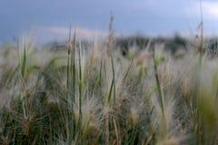 Miniaturowy słońce na trawie zdjęcia royalty free