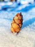Miniaturowy sosna rożek w śniegu Zdjęcie Royalty Free