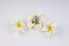 Miniaturpaare sitzen auf der Blume Stockbild