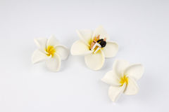Miniaturpaare sitzen auf der Blume Lizenzfreie Stockfotos