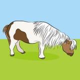 Miniaturpferd Stockfoto
