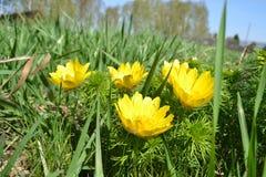 Miniatursonne auf dem Gras Stockbilder