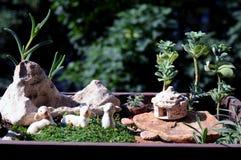 Miniaturtopfgarten stockfotos