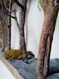 Miniaturwald stockbild