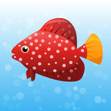 Miniatus Grouper fish Royalty Free Stock Photos