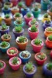 Miniatuur Cactus in kleurrijke planters Stock Afbeeldingen