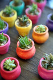 Miniatuur Cactus in kleurrijke planters Royalty-vrije Stock Afbeelding